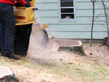 stump removal lawrence ma