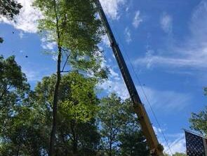 tall tree removal lawrence ma