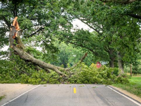 fallen tree removal lawrence ma