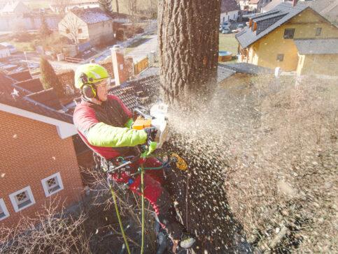 cutting down tree lawrence ma