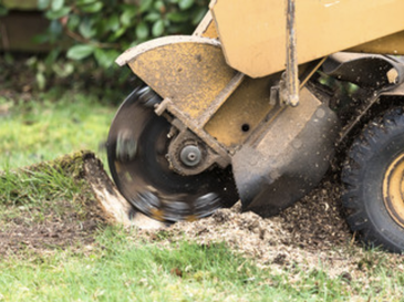 grinding stump service lawrence ma