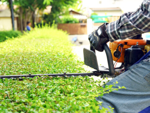 hedge trimming service lawrence ma