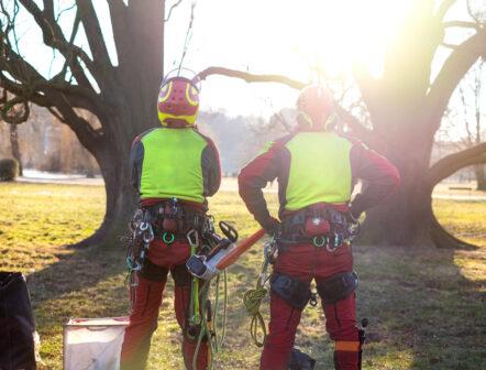 tree climbers lawrence ma