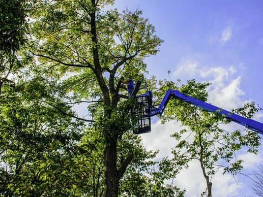 quality tree service lawrence ma
